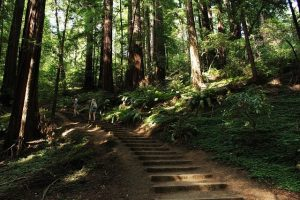 hiking for weight loss
