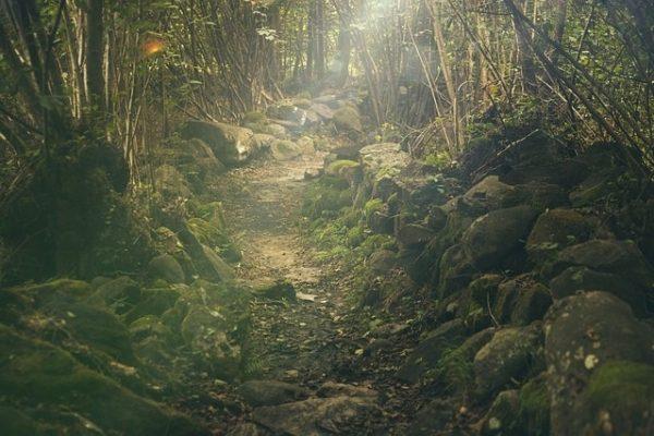 beginner's guide to trail running