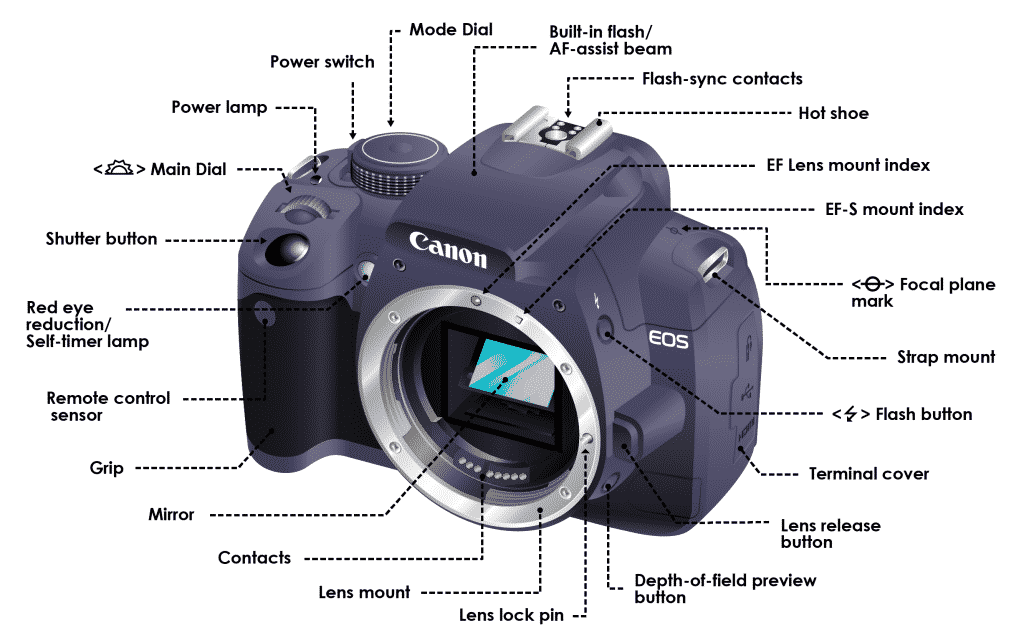Bridge Camera vs DSLR: A Complete Guide